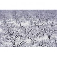 trees winter