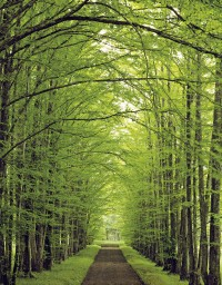 Tree Lined Rural Road